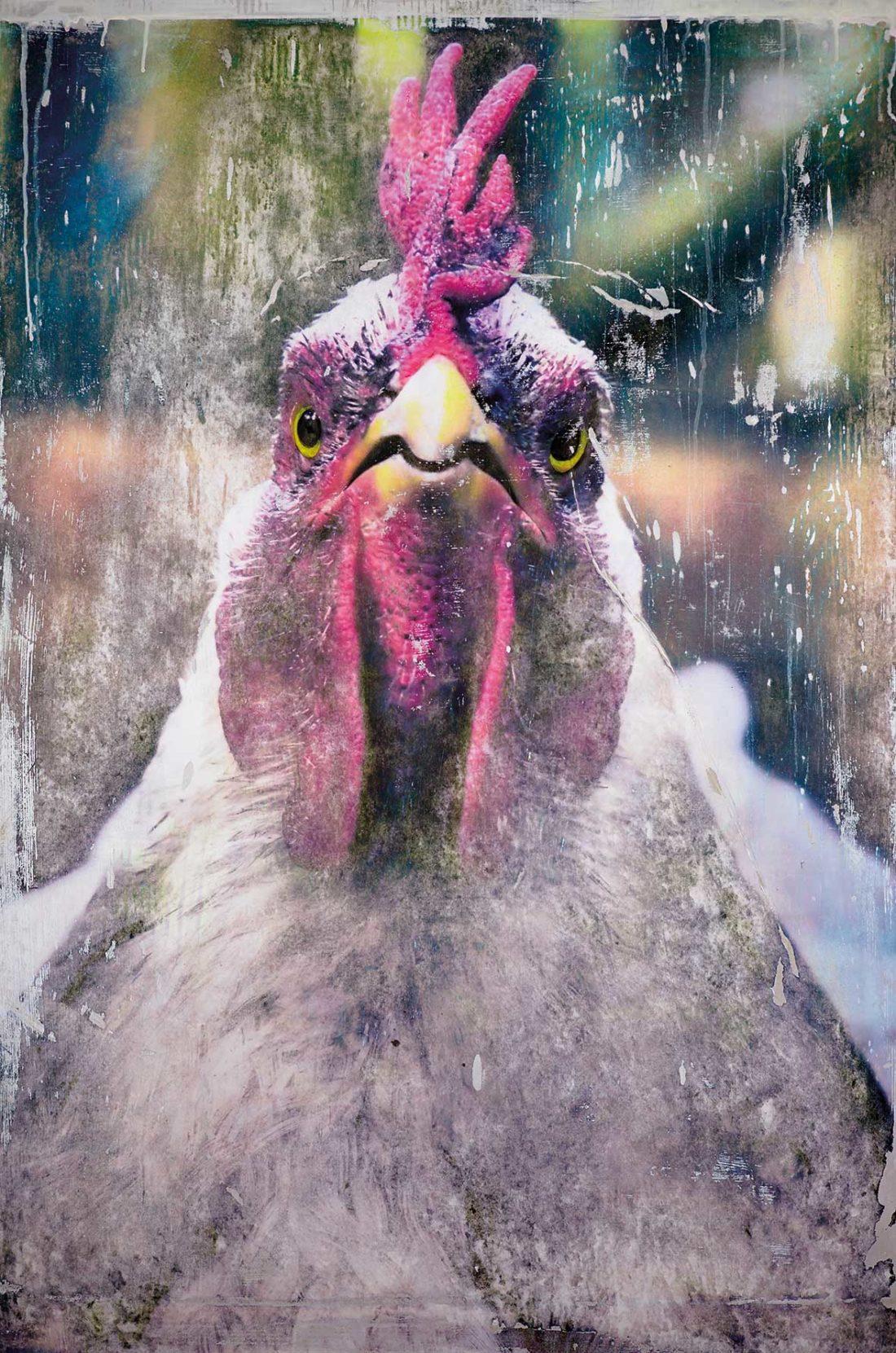 Huhn in Kunst